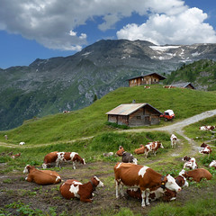 Austrian mountain farm at the foot of the Hintertux Glacier (Bn)