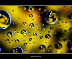 Tjiezi Drops  [explored] (Borretje76) Tags: light abstract macro reflection water netherlands glass dutch reflections iso100 droplets drops neon sony sigma plate f10 led explore software nik enschede pse bold druppel coole weerspiegeling kaas druppels 180mm verlichting reflecties refletie spatten explored glasplaat vertekening spatjes ledverlichting a580 tussendoortje plantenspuit gupr borretje76 dslra580 tjiezi uniekaas kaassnack
