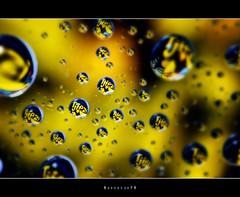 Tjiezi Drops  [explored] (Borretje76) Tags: light abstract macro reflection water netherlands glass dutch reflections iso100 droplets drops neon sony sigma plate f10 led explore software nik enschede pse bold druppel coole weerspiegeling kaas druppels 180mm verlichting reflecties refletie spatten explored glasplaat vertekening spatjes ledverlichting a580 tussendoortje plantenspuit gupr borretje76 dslra580 tjiezi uniekaas kaassnack
