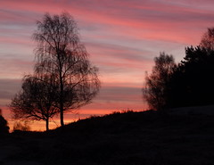 Fox Hill - New Forest (Nigel_Brown) Tags: uk sunrise dawn hampshire redsky newforest stockphoto foxhill quickpic