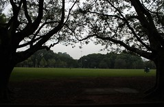 Campo do Ibirapuera, SP (Ded Oliveira) Tags: natal avenida natureza campo ibirapuera fantasma mato fnac brotas molde paisagens paulista espaodafotografia dedoliveira