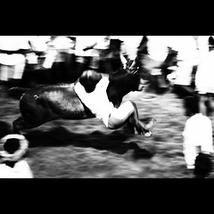 Hanging on at F'B'ULL Speed | Explored (VinothChandar) Tags: india motion blur history sport speed canon photography photo movement ancient force photos action fast bull bulls historic photograph hang madurai tame hold tamilnadu taming jallikattu alanganallur