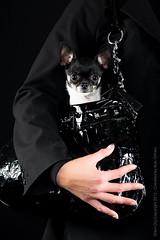 Marketing-photo-shoot-4 (Rob Orthen) Tags: dogs koiria roborthenphotography mainoskuvaus koirakuvaus