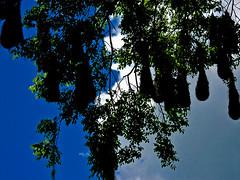 293 20100602110922 Tikal 62 (Ben Beiske) Tags: travel travelling geotagged travels traveller traveling highlight traveler worldtrip livingthedream benbeiske bencarstenbeiske