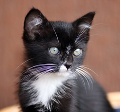 Curiosity revived the cat (One From RM) Tags: cats kitten gatti mici