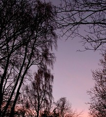Purple dusk (3 (Edinburgh Nette) Tags: trees sunset landscapes treest balerno january12
