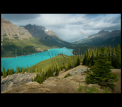 Peyto Lake (these are only words) Tags: blue favorite mountain lake canada mountains nature water beauty landscape rainbow turquoise overcast explore alberta wilderness favourite pristine peyto canadianrockies therockies greatphotographers bowsummit explored thecanadianrockies theseareonlywords glacierrockflour
