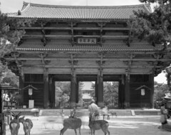 (Stanley) Tags: building japan temple fuji buddhist arc  4x5 100 nara  ebony largeformat     5x4 4x5camera   rodenstock  todaijitemple  15056 asiabuilding sv45te aposironarn thegreatbuddhahall    nationaltreasurerepairinginstitute