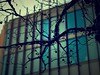 Bare tree branches (Fitzrovia) Tags: blur building tree lights branch branches twig deciduous twigs nikolai analogapp