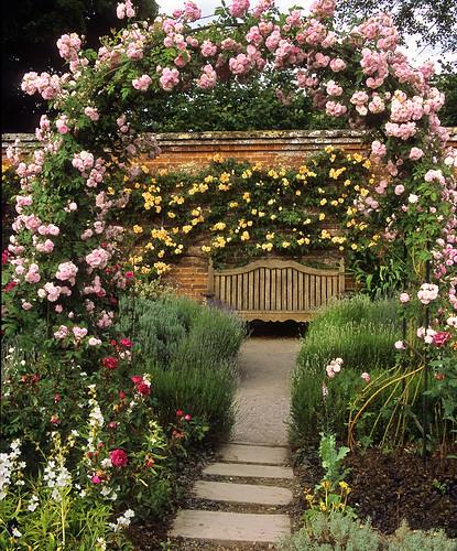 Roses For The Garden Uk Garden Ftempo