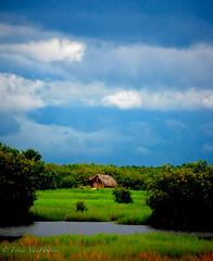 Benin Landscape (Erica VanHoosen) Tags: africa nature landscape hut swamp marsh benin