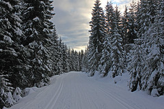 On my way to... (pelnit) Tags: trees winter snow norway landscape norge vinter sn landskap trr nittedal pelnit