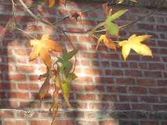 Yellow and Green Leaves with Brick Building (shaire productions) Tags: trees tree nature photo natural image outdoor grow growth photograph imagery