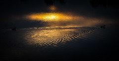 Heart (Matthew Johnson1) Tags: sunset reflection love nature water birds heart northamptonshire reservoir heartshape coots welford