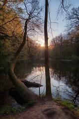 strange (Rainer Schund) Tags: sunset tree nature water strange forest see three nikon natur teich wald nikond700 naturemasterclass natureexploring