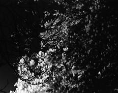 Denisovy Sady (nEjmEd) Tags: brno nightscene czechia fujineopan100acros pentax67 tetenalultrafinliquid