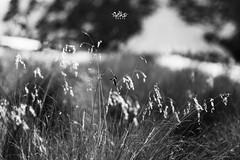 Detalles (betho itinerante) Tags: naturaleza los sombra dia bn cielo contraste doce detalles altura horizonte montaas nevado blanconegro volcn acercamiento