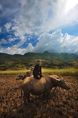 Sapa (Tonnaja Anan Charoenkal) Tags: life children landscape photo nikon rice image terrace album harvest picture vietnam northern sapa traval d700 tonnaja anancharoenkal