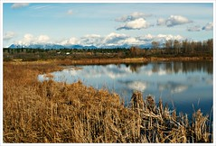 Day 329 - Duck Pond at Iono Beach (Free 2 Be) Tags: autumn mountains reflection fall pond flickr photoaday 365 2011 project365 365days 365challenge 365community