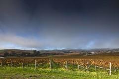 Rising Fog (Tom Moyer Photography) Tags: california mist fog barn vineyard vine sonomacounty winecountry tse17mmf4l