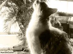 MarcelaGunner Fotos #343 (MarcelaGunner 2) Tags: luiza gata janela cheirando marcelagunner