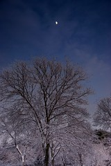 Moon in Winter (Dan:Brown) Tags: winter moon tree night foliage