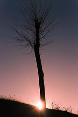 Christmas eve in Spain (ACPerona) Tags: sunset tree sol de árbol puesta