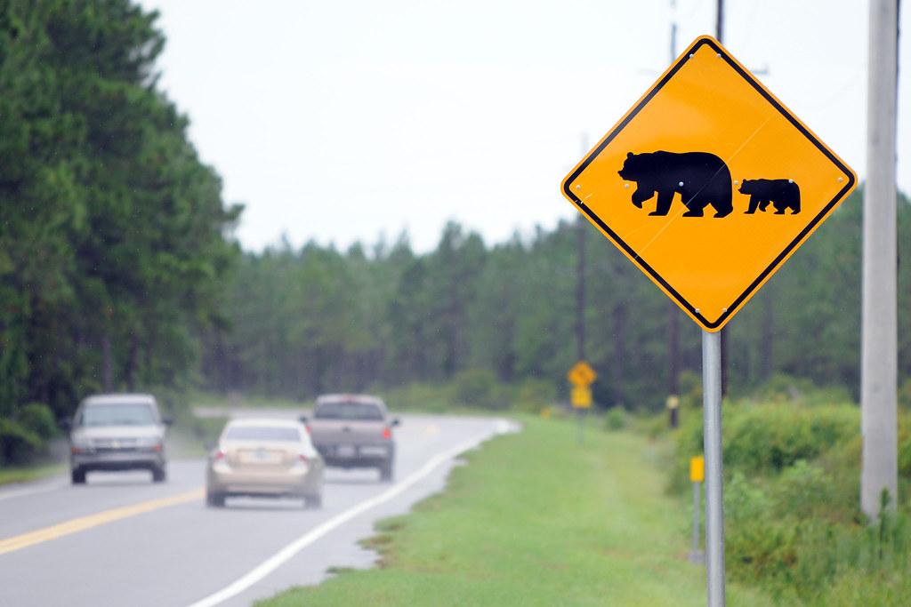 Bear Crossing Sign by MyFWCmedia, on Flickr
