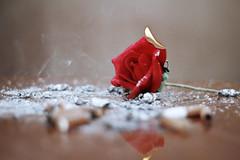 التدخين بداية للنهاية Smoking the beginning of the end (Ahmad Al-Hamli) Tags: