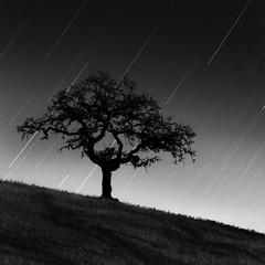 Thirty 3 & 1/ Third (maxxsmart) Tags: california longexposure bw tree 6x6 monochrome night mediumformat stars kodak marincounty ilford startrails tmax100 selfdeveloped hasselblad500cm reciprocity 40minutes ilfosol3114 maxxsmart 2400seconds zeiss150mmcff8