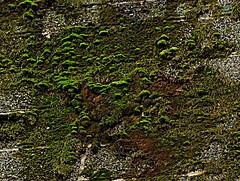 The Moss That Never Fails (BACKYard Woods Explorer) Tags: moss decay abandonedbuildings dirtywalls dirtybricks casinosupplywarehouse fujifilmfinepixs1500 january2012