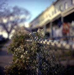 (patrickjoust) Tags: park city urban usa house blur flower color tree 120 6x6 tlr film home analog rolleiflex zeiss america fence square lens us reflex md focus mechanical kodak united north patrick twin maryland slide row baltimore chain chrome link medium format 100 states manual epp expired 80 joust ektachrome e6 f28 hampden wyman rowhouse 220 planar estados 80mm reversal unidos 28f franke autaut heidecke patrickjoust