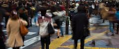 Lost in Shibuya (davidkoiter) Tags: road street city people urban motion david blur japan canon eos tokyo moving december crossing walk capital crowd shibuya busy 7d l series crosswalk bustle f4 1740 scramble hustle 2011 f4l pedestrial koiter