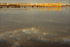 Reflections (Foto Martien (thanks for over 2.000.000 views)) Tags: winter holland water netherlands dutch flooding flood nederland rhine dieren doesburg ijssel veluwe uiterwaarden gelderland floodplain riverijssel wateroverlast rijndelta a550 floodedfarmland rhinedelta martienuiterweerd carlzeisssony1680 martienarnhem gelderseijssel sonyalpha550 mygearandme mygearandmepremium martienholland mygearandmebronze mygearandmesilver mygearandmegold mygearandmeplatinum floodedlandscape ringexcellence dblringexcellence fotomartien tplringexcellence overtstroming overstroomdeakker overstroomdelandbouwgrond overstroomdlandschap floodedcultivatedfield eltringexcellence