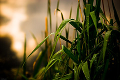 """""""The little reed, bending to the force of the wind, soon stood upright again when the storm had passed over."""" (=Я