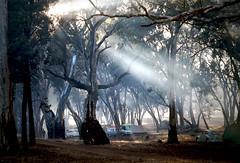 Bush Camp Easter 1966 (Colin Clarke~) Tags: camping trees film landscape pentax slide 1966 campfire transparency outback kodachrome southaustralia flindersranges gumtrees kodchrome eucalyptustrees bushcamp pentaxs1a autaut flinersranges colinjclarke smokeintrees breakfastfire