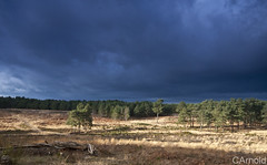 dark moody sky (justyourcofchi) Tags: blue grey sky clouds rain sun sunshine winter uk england countryside surrey pirbright ranges woods woodland forest pine army mod canonblue justyourcupofchicom justyourcupofchi photographer