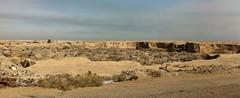 Basrah Rural Scene, Iraq