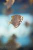 Fish Portrait (Lauren Barkume) Tags: africa blue light vacation portrait fish color yellow silver southafrica aquarium december ct bubbles capetown westerncape 2011 underwarter laurenbarkume gettyimagesmeandafrica1
