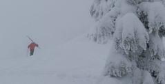 first letter (.WFJ) Tags: trees snow rain fog kids fun paul for skins skiing bc pants hiking britishcolumbia goggles meadow slush smith powder io ridge tricks jacket alpine sabre billy alpha g3 stinger robbie squamish jumps touring sv sleet alpinist arcteryx thebestplaceonearth redheather genuineguidegearinfidels