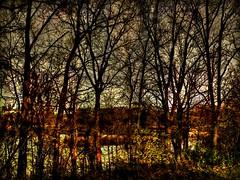 No Borders, No Fences, No Walls... (Paul B0udreau) Tags: autumn light sunset ontario canada tree texture water leaves creek landscape samsung niagara master bark layer stcatharines hdr picnik goldenhour tmi hypothetical fallcolours martindalepond 12milecreek photomatix vividimagination tonemapping rockpaper shockofthenew newreality maxfudge awardtree samsungmaster daarklands fujifilmfinepixs1500 trolledproud trollieexcellence paulboudreauphotography netartii