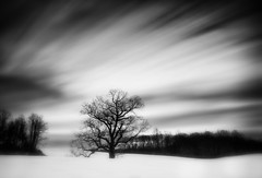Cold and Bare (MDanielsonPhoto) Tags: statepark longexposure winter sky blackandwhite bw snow ny cold tree field clouds bare huntington le caumsett caumsettstatepark lloydneck michaeldanielson mdanielsonphoto