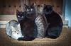 5 Moixos (Juan Antonio Capó) Tags: animal cat kat feline chat fuji gato felino fujifilm katze mace 猫 gatto kot gat kočka kedi kissa köttur mačka kucing x10 pusa mèo moix گربه кошка 고양이 minino γάτα мачка котка pisică แมว قط кішка 잭 קאַץ िल्ली fujifilmx10 fujix10 חתולվալետ
