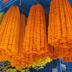 "Orange Marigolds at Howrah Flower Market <a style=""margin-left:10px; font-size:0.8em;"" href=""http://www.flickr.com/photos/14315427@N00/6829215945/"" target=""_blank"">@flickr</a>"