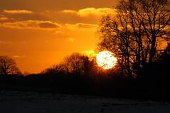 Suffolk Sunset in early February (Kirkleyjohn) Tags: sunset silhouette atardecer countryside suffolk eastanglia