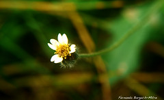 MINIATURA (ojoadicto) Tags: flower macro nature flickrstruereflection1