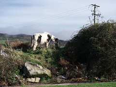 Horse, Deerpark Bray (turgidson) Tags: park ireland wild horse abandoned studio lens four lumix raw zoom 5 g version x deer panasonic telephoto developer micro pro piebald wicklow f28 bray dmc deerpark thirds vario m43 silkypix gh2 35100mm 35100 mirrorless 50450 lumixg microfourthirds panasonicgh2 panasoniclumixdmcgh2 p1210912 silkypixdeveloperstudiopro5 panasonic35100 panasoniclumixgxvario35100mmf28 hhs35100