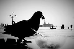 Pietro Pigeon picked a plated peanut (morag.darby) Tags: light blackandwhite bird silhouette digital mono pier nikon noiretblanc harbour pigeon candid peanut nikkor d3300