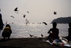 A day at the beach (le grand monsieur) Tags: beach japan gull windsurfing swimmers