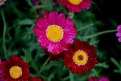 Happy flowers (only_sepp) Tags: primavera colore fiori prato exquisiteflowers allnaturesparadise